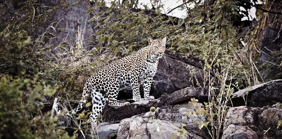 6d0033c1758 Aura - Klaus Tiedge Fine Art Wildlife Photography