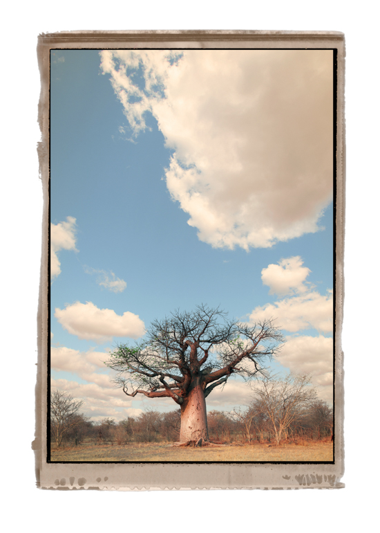 NNB#1-© AfricanFineArt.co.za