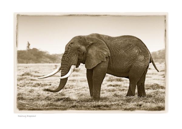 https://www.klaustiedge.com/wp-content/uploads/W02_Wan_Resting-Elephant-©AfricanFineArt.co_.za_.jpg