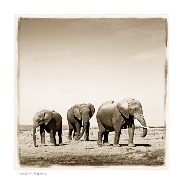 https://www.klaustiedge.com/wp-content/uploads/W06_Wan_Lumbering-Elephants-©AfricanFineArt.co_.za_.jpg
