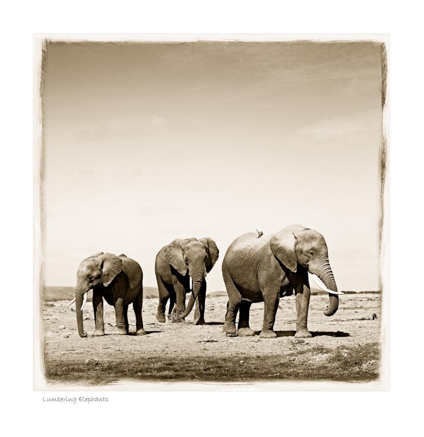 https://www.klaustiedge.com/wp-content/uploads/W06_Wan_Lumbering-Elephants-©AfricanFineArt.co_.za_.jpg