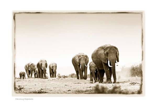 https://www.klaustiedge.com/wp-content/uploads/W07_Wan_Marching-Elephants-©AfricanFineArt.co_.za_.jpg