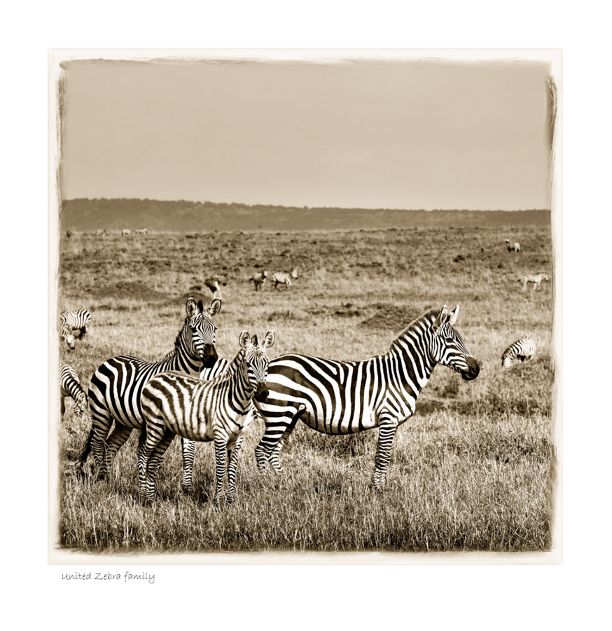 https://www.klaustiedge.com/wp-content/uploads/W17_-Wan_United-Zebra-family-©AfricanFineArt.co_.za_.jpg