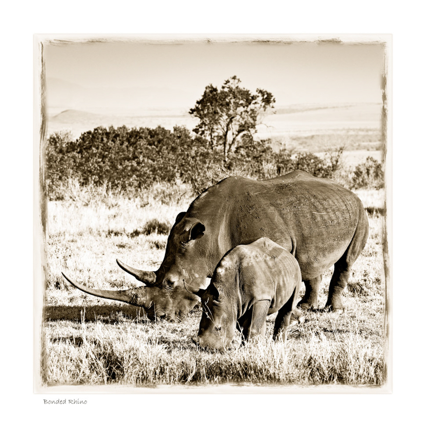 AfricanFineArt_Sepia_W23