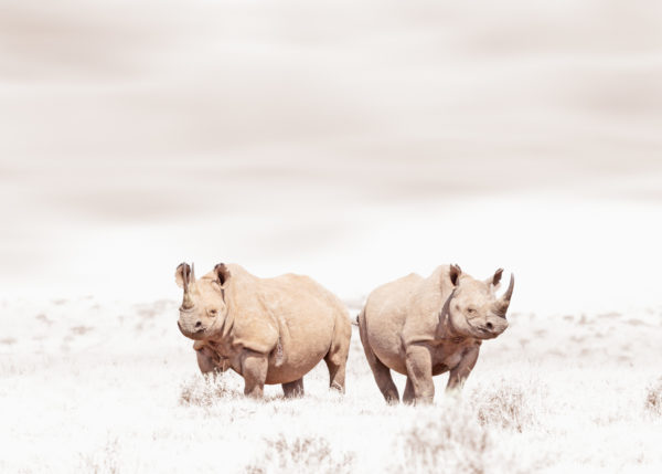 W40_White_Rhino Duo© Klaus Tiedge