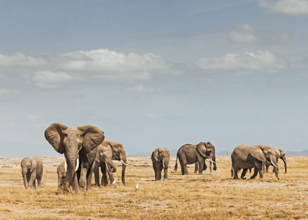 W60_Color_Elephant Herd© AfricanFineArt.co.za