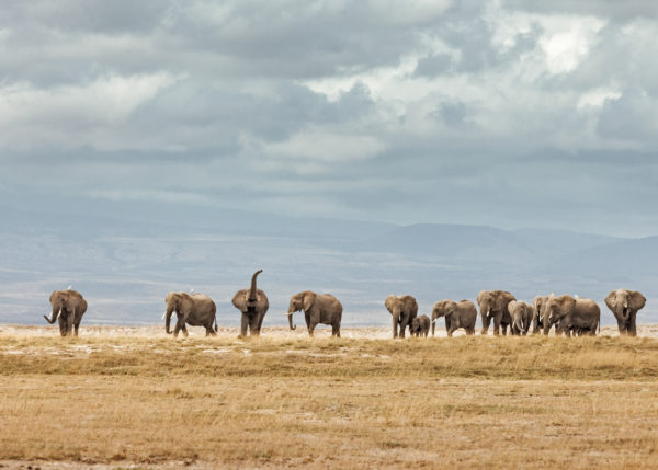 W65_Color_Elephant Herd© AfricanFineArt.co.za