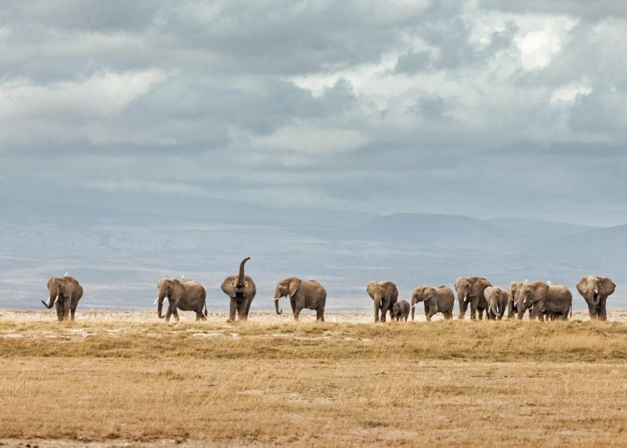 W65_Color_Elephant Herd© AfricanFineArt.co.za