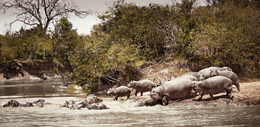 ABODE-AT-MARA-RIVER limited edition fine art print by Klaus Tiedge
