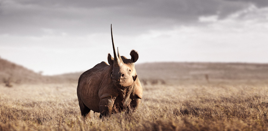 MONARCH OF LEWA 1 limited edition fine art print by Klaus Tiedge