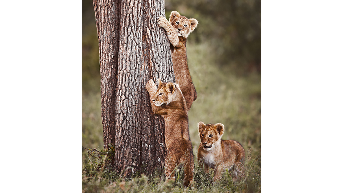WILDLIFE-(vertical)_INNOCENT-PRIDE_cropped
